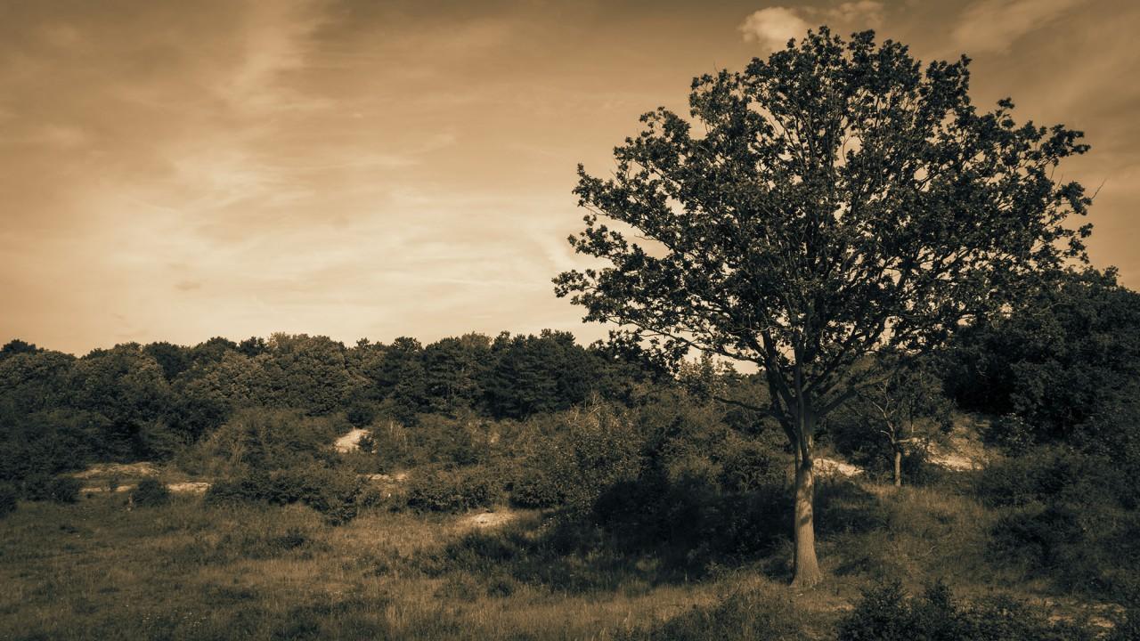 De boom die het overziet